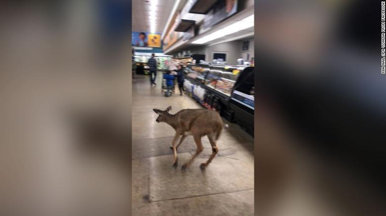 Một con nai chạy xuyên qua siêu thị ở Ấn Độ