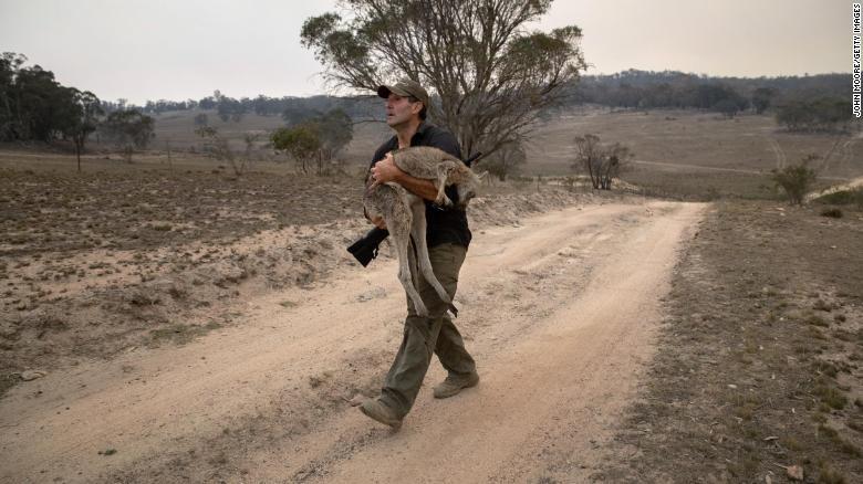 Gần ba tỷ động vật bị giết hoặc di dời bởi những đám cháy ở Úc