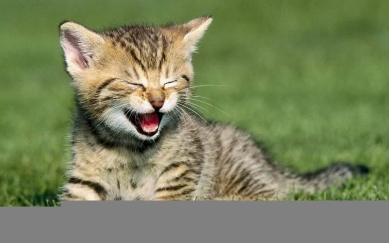 Thức ăn cho mèo (Quest) được bán trên toàn quốc ,bị thu hồi vì gây rủi ro cho vật nuôi và con người.