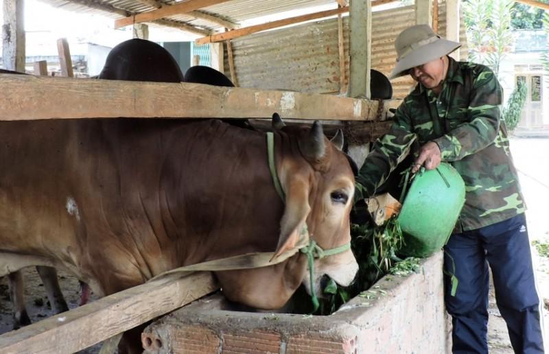 Kon Tum: 257 con trâu, bò bị chết do rét đậm, rét hại