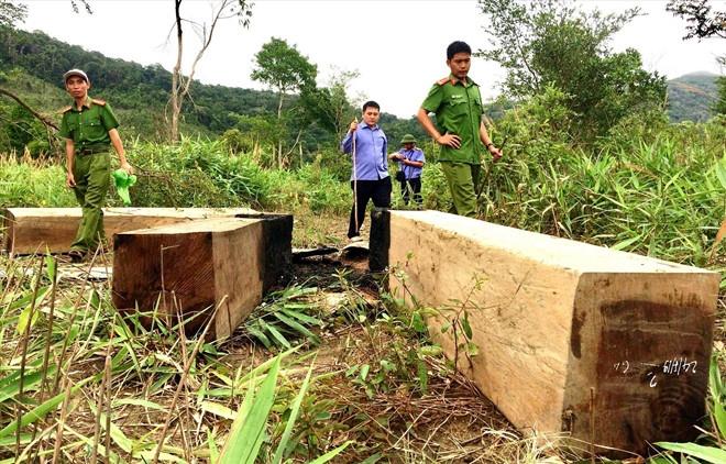 Chủ tịch tỉnh yêu cầu xử lý chủ tịch huyện 'bất lực giữ rừng'