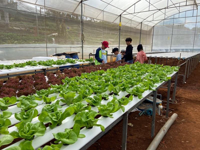 """Gia Lai: """"Vườn rau sạch cho bé"""" của VETA Farm được nhiều phụ huynh và nhà trường tham gia."""