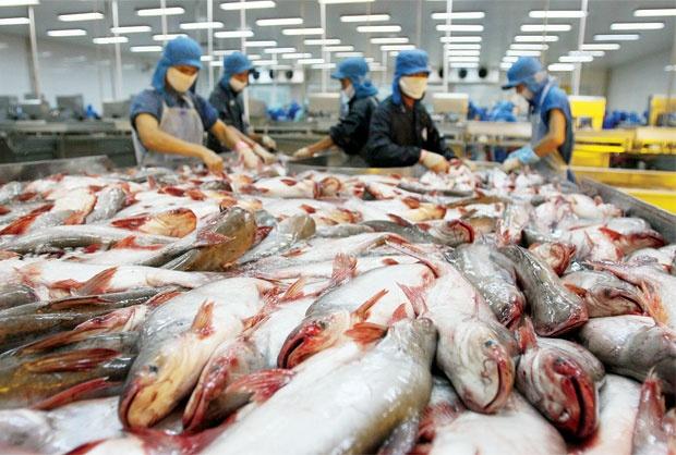 Việt Nam trình đơn khiếu nại đến WTO việc Mỹ áp thuế với cá phi lê
