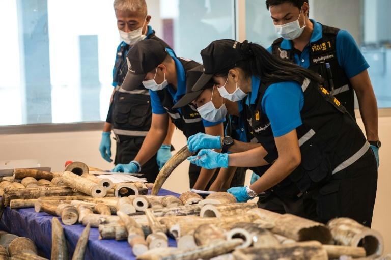 Thái Lan bắt giữ anh em trùm buôn lậu ngà voi gốc Việt