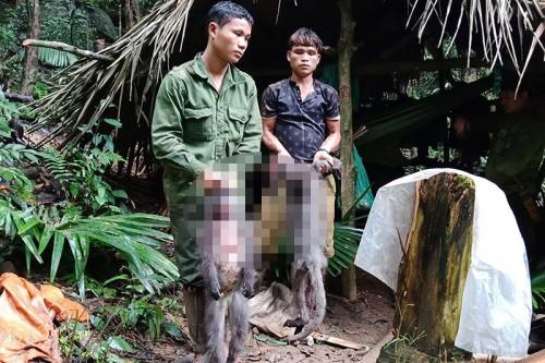 Nghệ An: Bắt quả tang nhóm thợ săn dùng súng giết cặp voọc quý đang mang thai