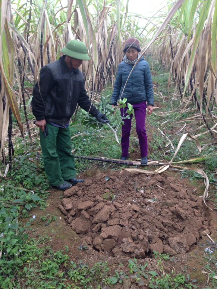 500 cây cam của người dân bị kẻ gian chặt hạ vào ngày 28 Tết