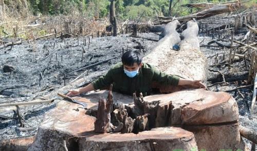 Khởi tố, bắt tạm giam đối tượng chủ mưu phá gần 15 ha rừng ngày giáp Tết