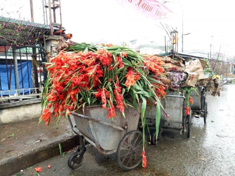 Hà Nội: Giá rớt thê thảm, hàng nghìn bó hoa lay ơnbị đổ bỏ trên đường