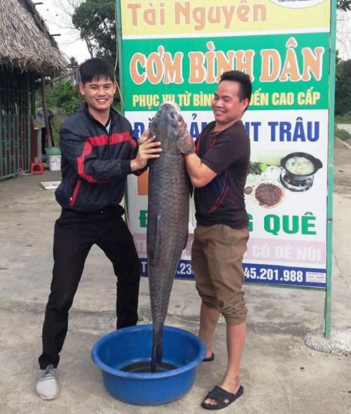 Thanh Hóa: Người dân bắt cá trắm đen dài gần 1 mét, nặng hơn 33 cân