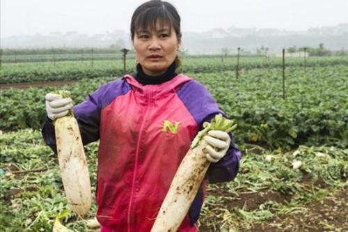Bộ NN-PTNT yêu cầu kiểm tra, hỗ trợ nông dân trước thông tin rau quả rớt giá thảm hại