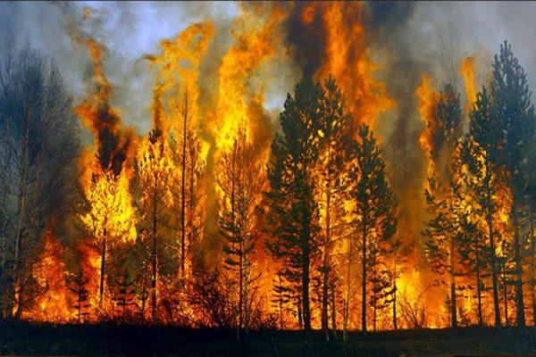 Nhiều địa phương có nguy cơ cháy rừng rất cao