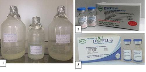 Việt Nam tự sản xuất vắc xin cúm mùa '3 trong 1'
