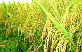 Đề xuất danh mục loài cây trồng chính
