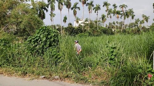 TP.HCM: Phát hiện thi thể người đàn ông đang phân hủy trong bãi cỏ