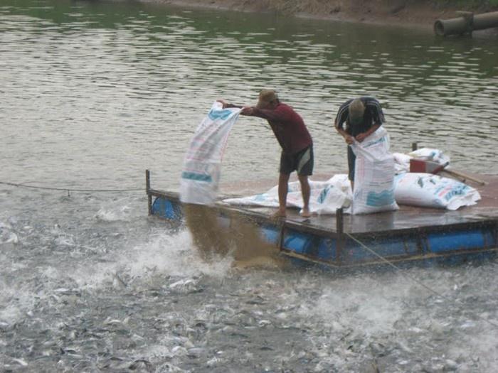 Đề xuất phạt 100 triệu đồng với cá nhân, 200 triệu đồng với tổ chức có hành vi sử dụng chất cấm trong nuôi trồng thủy sản