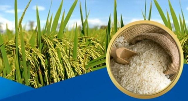 Đề xuất 15 sản phẩm nông nghiệp chủ lực quốc gia