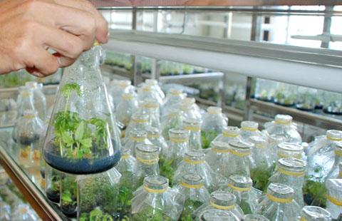 Quy chế hoạt động của Khu công nghệ cao công nghệ sinh học Đồng Nai
