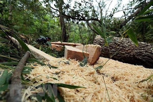 Điện Biên kiểm tra, xử lý nghiêm vụ phá rừng già Nà Pen