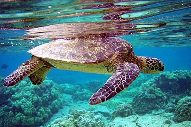 Quản lý loài thủy sản nguy cấp, quý hiếm