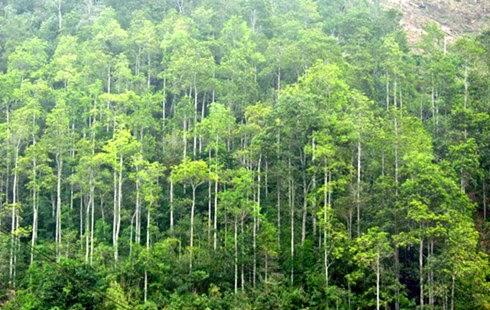 Lâm Đồng tăng cường quản lý, bảo vệ rừng
