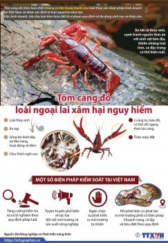 infographics tom cang do loai ngoai lai xam hai nguy hiem