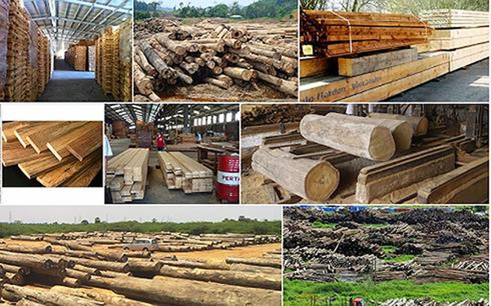Đề xuất quy định Hệ thống bảo đảm gỗ hợp pháp Việt Nam