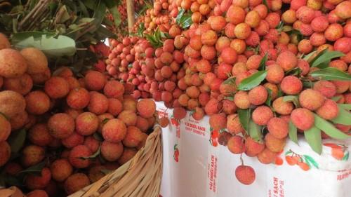 Vải thiều Bắc Giang xuất khẩu đi nhiều nước trên thế giới