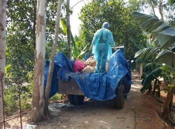 Đề xuất hai phương án hỗ trợ thiệt hại dịch tả lợn châu Phi