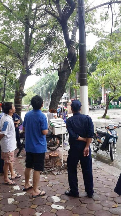 Hà Nội: Kẻ gian cưa trộm gốc cây sưa đỏ hơn 20 năm tuổi trong đêm mưa