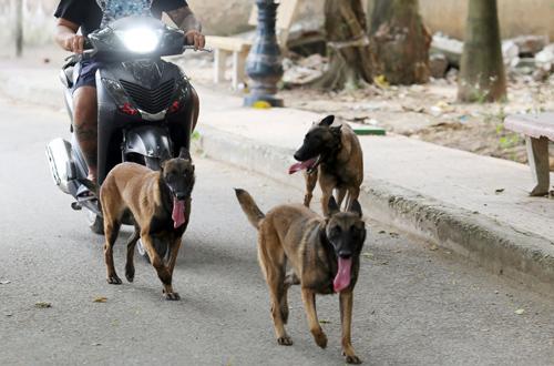 Hà Nội thành lập đội săn bắt chó thả rông, bắt đầu hoạt động từ đầu năm 2019
