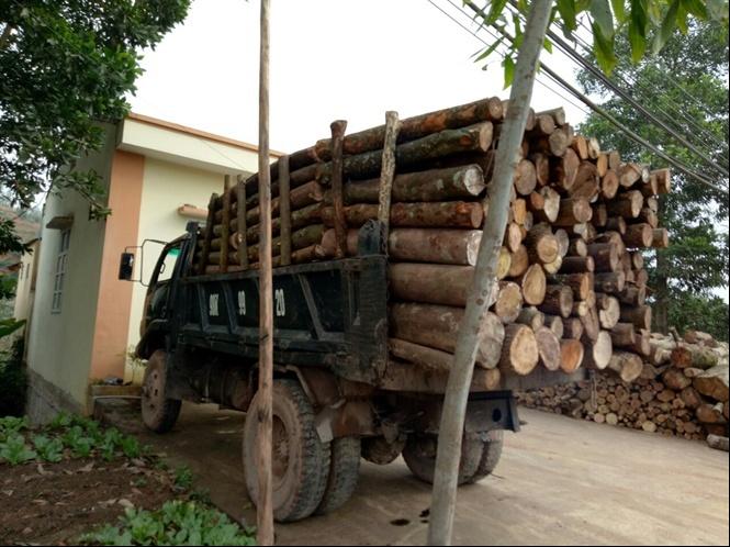 Bắc Giang bắt vụ vận chuyển 4,1 m3 gỗ trái pháp luật