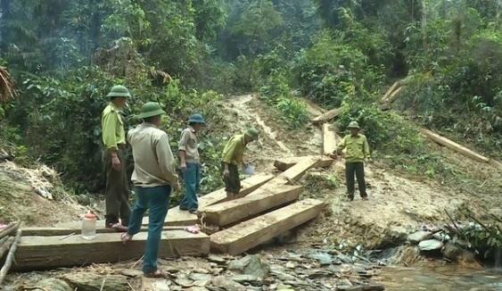 Quảng Bình: Phát hiện vụ phá rừng lớn nhất từ trước đến nay