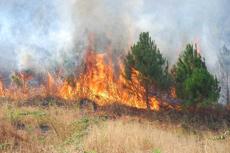 Nguy cơ cháy rừng cấp cực kỳ nguy hiểm ở 12 tỉnh