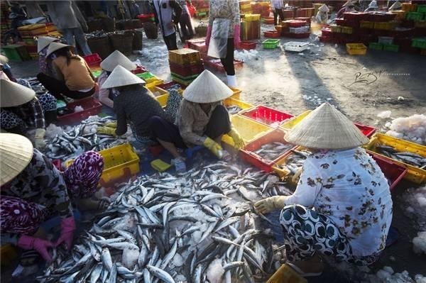 TPHCM kiểm tra tổng thể khai thác thủy sản trên biển và tại cảng cá