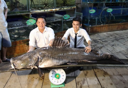 Đồng Tháp: Cá lăng nặng hơn 100 kg 'sa lưới' ngư dân trên sông Tiền
