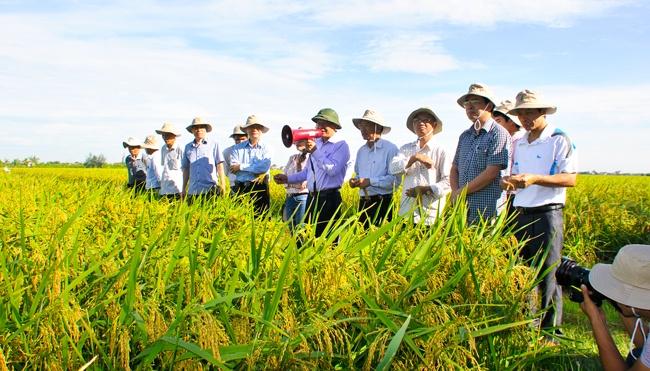 Hỗ trợ chuyển giao công nghệ trong lĩnh vực khuyến nông