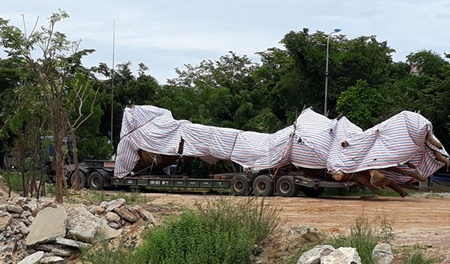 Quảng Trị: Tạm giữ xe đầu kéo chở cây 'khủng'
