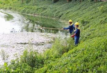 Cá chết nổi trắng góc hồ công viên Yên Sở
