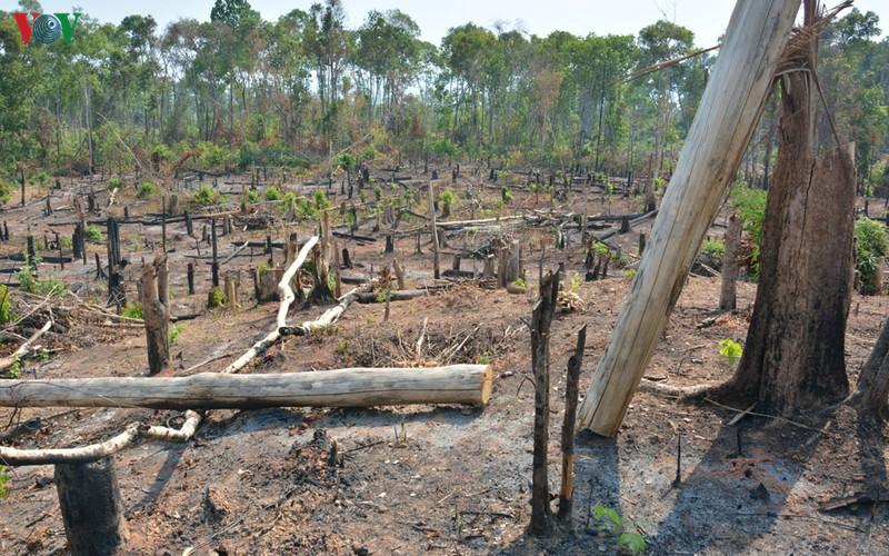 Công an điều tra vụ mất 1.200 ha rừng ở Gia Lai
