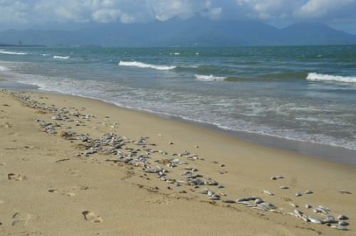 Điều tra nguyên nhân vụ phát hiện gần 2 tấn cá mòi chết trôi dạt vào bờ biển Đà Nẵng