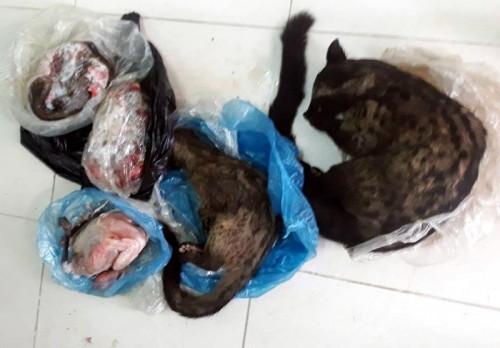 Nghệ An: Ra quyết định xử phạt hành chính nữ Chủ tịch Hội Chữ thập đỏ xã rao bán động vật hoang dã trên Facebook