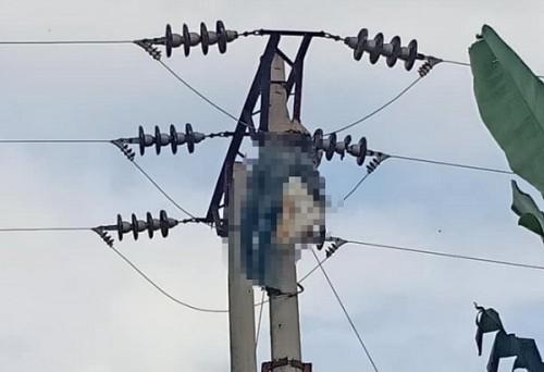 Phú Thọ: Người đàn ông bị điện giật tử vong vì trèo lên cột điện cao thế bắt ong