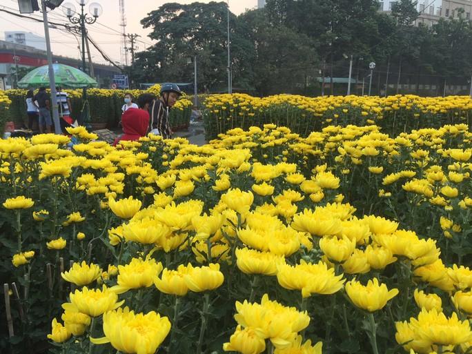 Các chợ hoa bắt đầu mở cửa đón khách