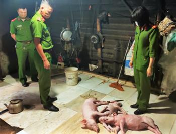 Phát hiện cơ sở chế biến lợn chết thành lợn quay, tôm chết hóa tôm nõn sấy khô để bán cho khách