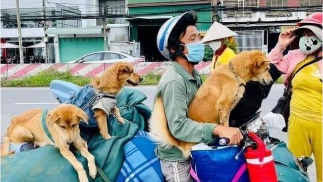 vu chinh quyen dia phuong tieu huy 15 chu cho vat nuoi co lam lay lan covid 19 hay khong