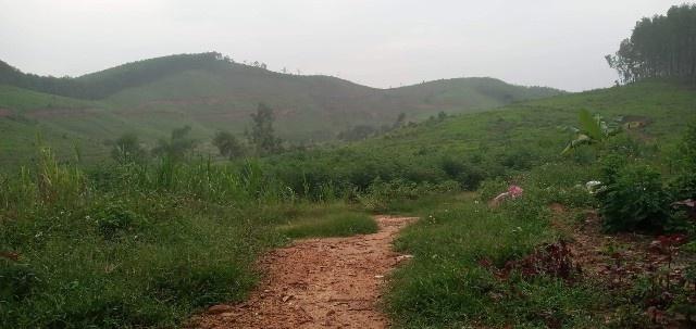 Tranh chấp đất đai tại Lâm trường Đồng Hợp (Nghệ An): Vụ việc vẫn chưa có hồi kết