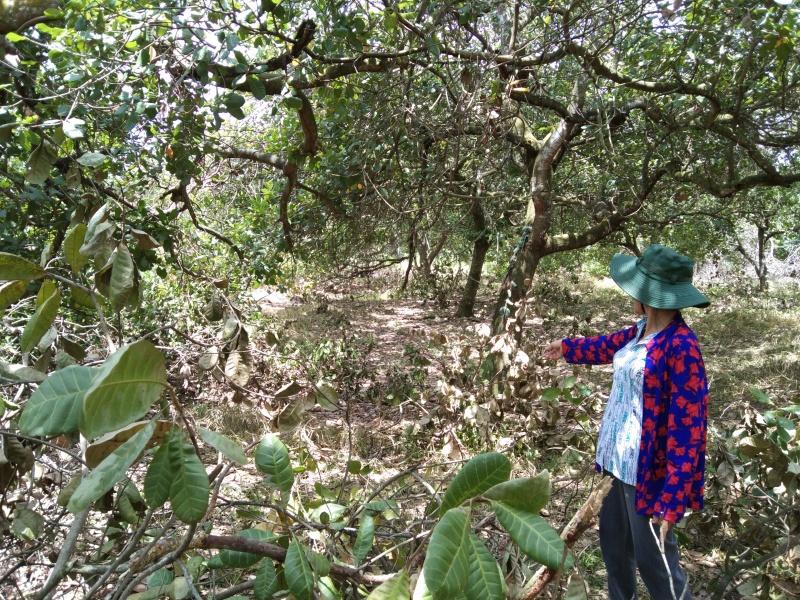Mập mờ về nguồn gốc và diện tích thửa đất 68