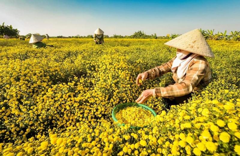 Hải Phòng: Đẩy mạnh phát triển hợp tác xã trong nông nghiệp