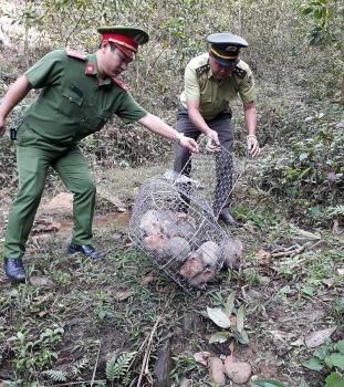 xu phat doi tuong van chuyen hon 70 ca the dui trai phep