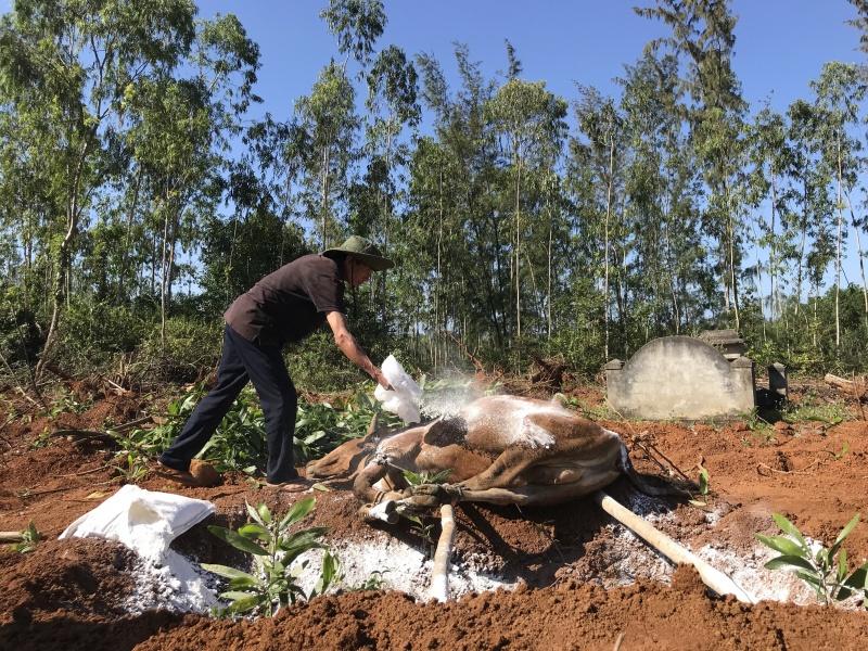 Quảng Ngãi: Phun 7.000 lít hóa chất khử trùng ngăn dịch lở mồm long móng